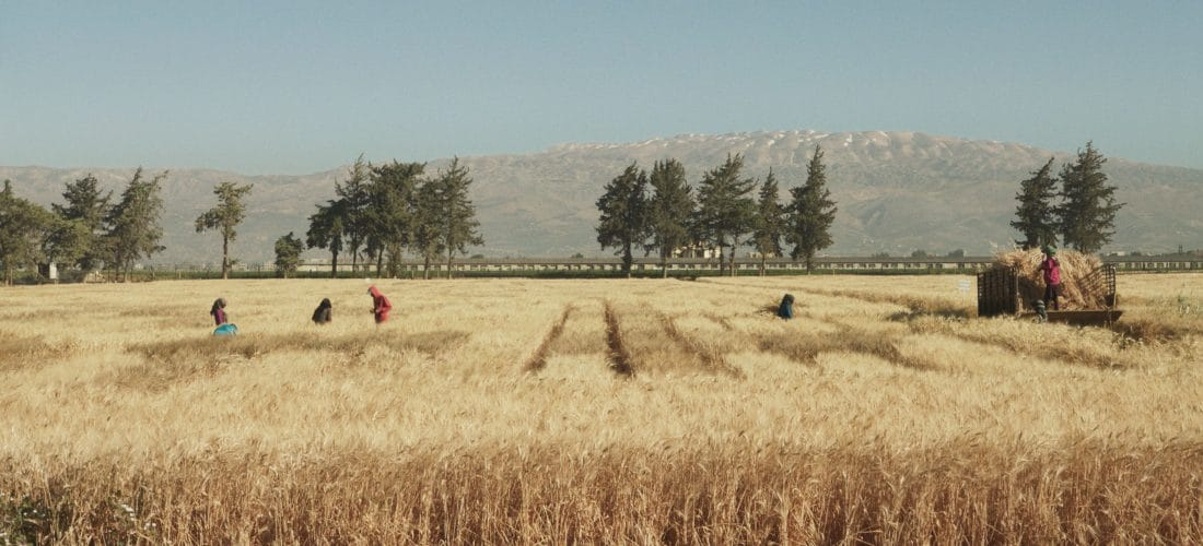Film: Wild Relatives by Jumana Manna
